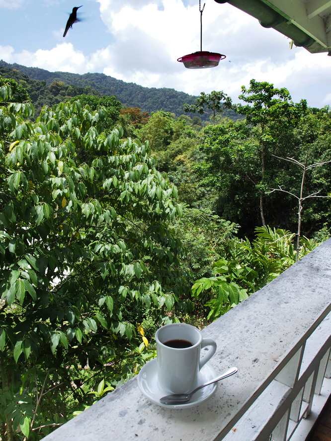 Trinidad coffee at Asa Wright with hummingbirds fluttering about.